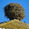 White Stork's Nest