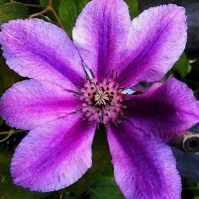 Pretty in Purple by Roxanne Dean - Flowers Single Flower ( colorful, flowers, buds, purple stem,  )