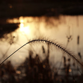 by Angie Isaac - Nature Up Close Leaves & Grasses