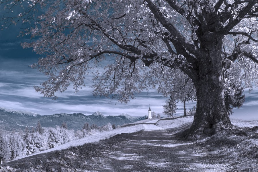 by Dominik Konjedic - Nature Up Close Trees & Bushes ( church, tree, slovenia, way, jamnik, worship )