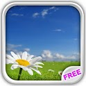 Camomile Flower Live Wallpaper icon