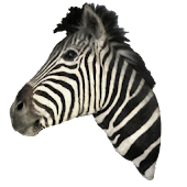 Zebra Head Sticker