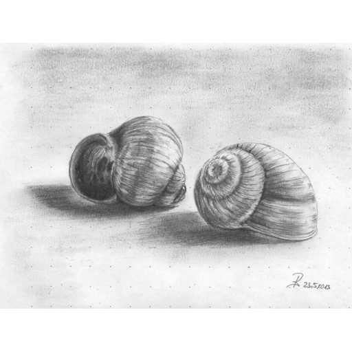 ArtToDraw 0001 Snail Shells