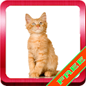 Cats Amazing Sounds Collection icon
