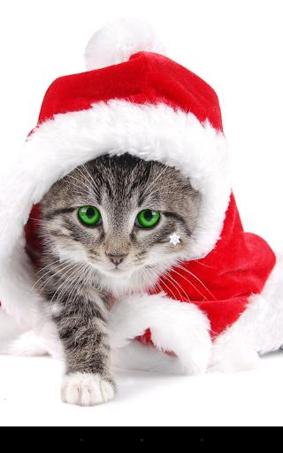 mod Christmas Cat Live Wallpaper 2.8.1 screenshots 1
