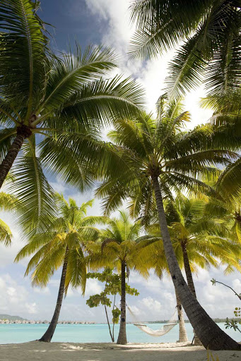 Palm trees sway in the island breeze at the St. Regis Bora Bora Resort.