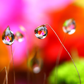 Flower in Dew by Irfan Yulianto - Nature Up Close Other plants