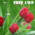 Tulips in Rain Livewallpaper icon
