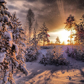 Winter wonderland by Micke Lagestam - Landscapes Forests