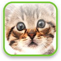 Cute Kitty Video Wallpaper icon