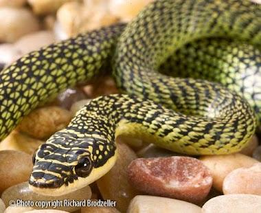 Snake Dangerous Wallpapers