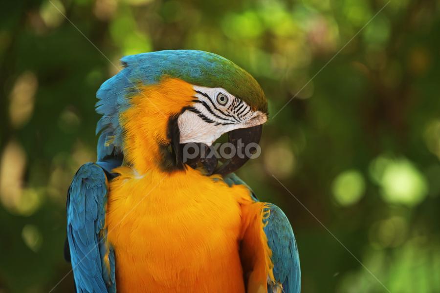 Parrot Grooming Birds Animals Pixoto
