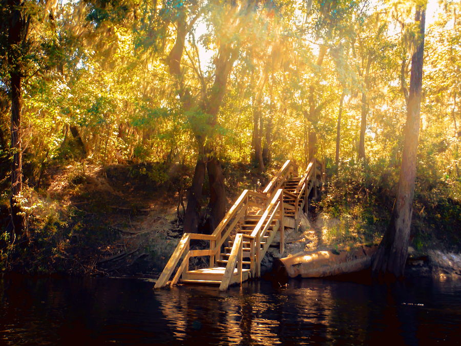 Suwannee River by Terri Anderson - Digital Art Places ( water, stairs, trees, sunshine, river,  )