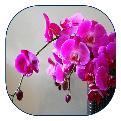 Orchid Live Wallpaper