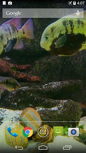 Fish Tank Live Wallpaper