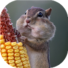 Funny rodents live wallpaper icon