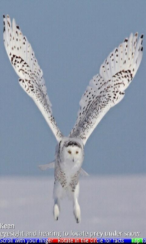 Wild Animals of the Arctic- screenshot