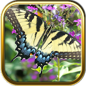 Free Butterfly Puzzle Games