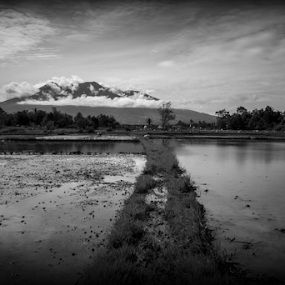 My backyard by Adi Krishna - Black & White Landscapes