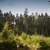 Sprucewoods