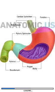 消化系统解剖游戏|玩解謎App免費|玩APPs
