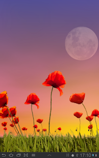 Poppy Field Free- screenshot thumbnail