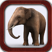 Talking Elephant Real 3D