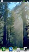 Screenshot of Redwoods Live Wallpaper