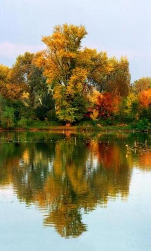 免費娛樂App|300 Autumn Tree Free Pictures|阿達玩APP