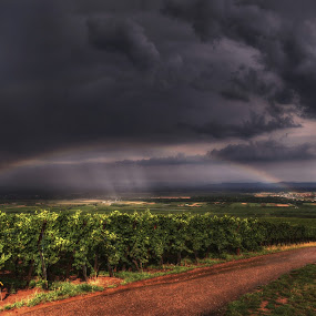 rainbow over the vineyards ... by Joseph Muller - Landscapes Weather ( vineyard, rainbow, , #GARYFONGDRAMATICLIGHT, #WTFBOBDAVIS )