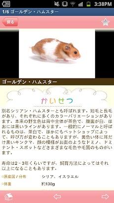 かわいい小動物図鑑のおすすめ画像3