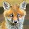 Fox72_052314pix.JPG