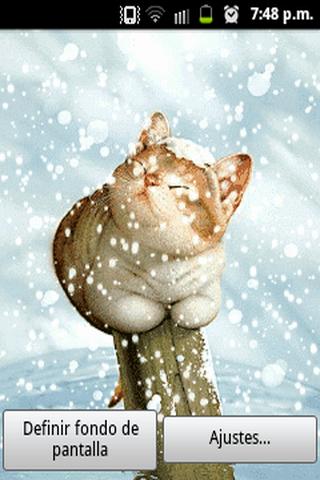 Cat in the snow LW