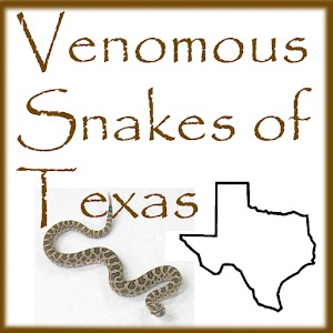 Venomous Snakes of Texas