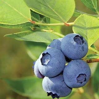 Blueberry Salsa.