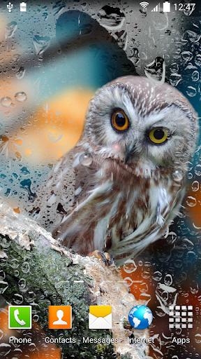 Rain Live Wallpaper 1.0.9 screenshots 7