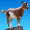 Urla capre APK