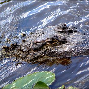 by Sraddheshnu Basu - Animals Amphibians
