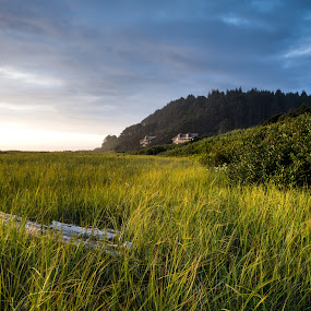 Sand Grass by Nolan Hauke - Landscapes Beaches ( washington, hills, grass, peace, summer, beach, emotion )