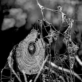Black and white spider web by Chris KIELY - Black & White Macro ( white, lines, web, spider, black,  )