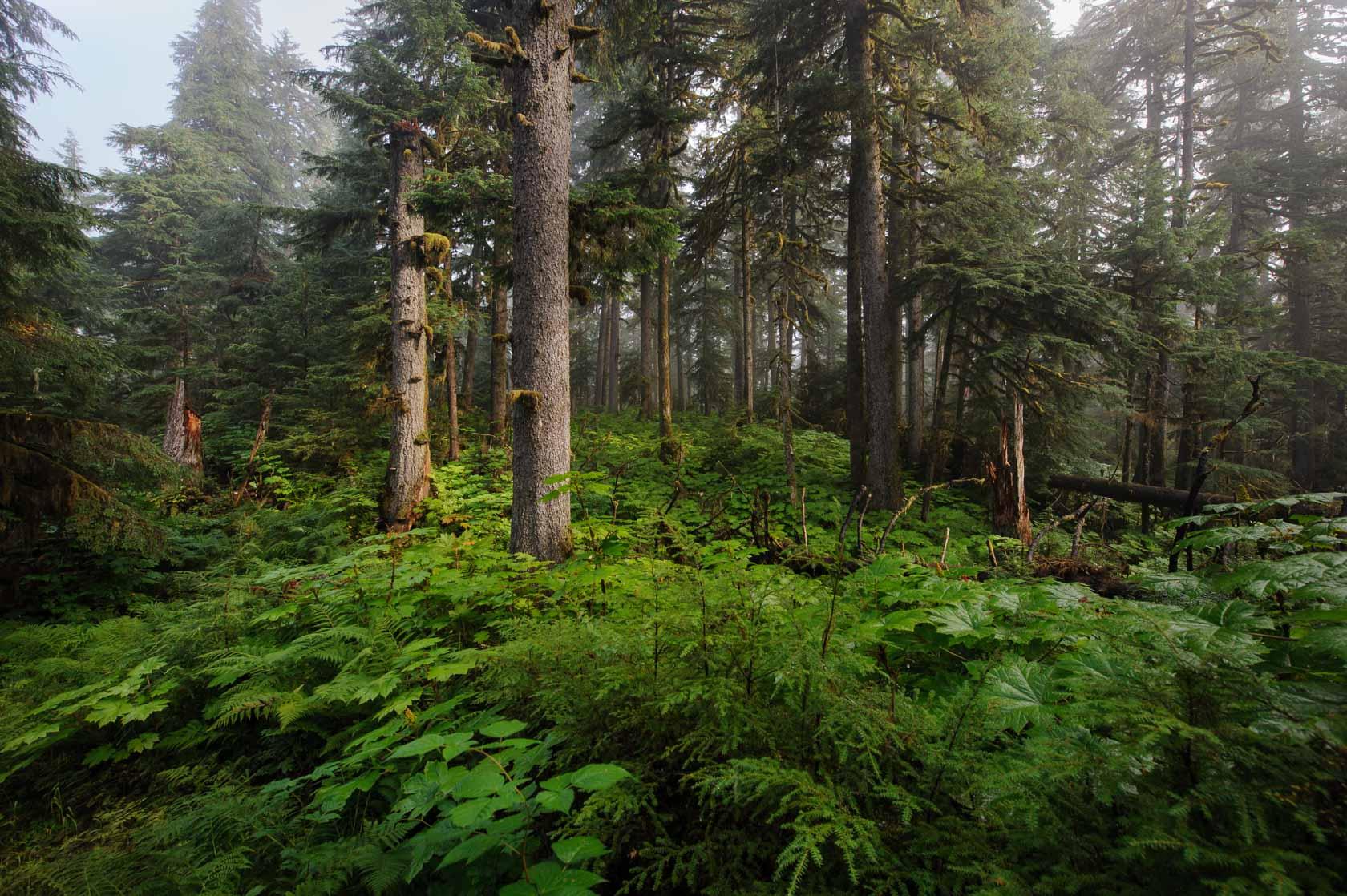 Coastal Rain Forest, Wrangell, Alaska