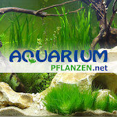 aquariumpflanzen.net