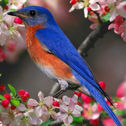 Colorful Birds Live Wallpaper