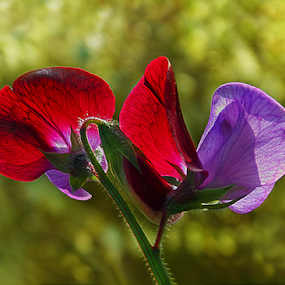 by Kallol Bhattacharjee - Nature Up Close Flowers - 2011-2013 (  )