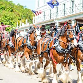 Mackinac Island Lilac Festival Grand Parade by Reshmid Ramesh - News & Events Entertainment ( parade, mackinac, mackinaw )