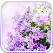 julian and lilac petal dating simulator