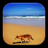 Animals of Australia Wallpaper