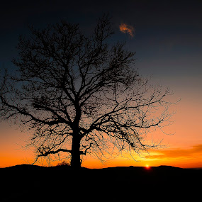 Lovely sunset by Cristian Manolache - Landscapes Sunsets & Sunrises ( warm, tree, colors, sunset, nikon )