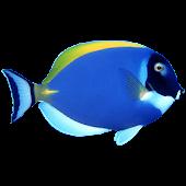 Aqua Live Wallpaper