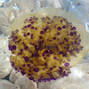 Mediterranean Jelly / Mediteranska meduza